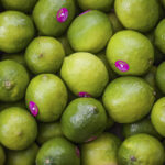 Canning Orchard Limes